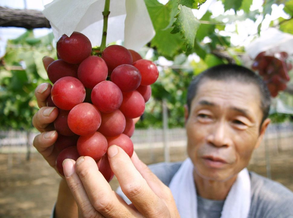 $10K Bunch of Grapes Sold at Auction in Japan