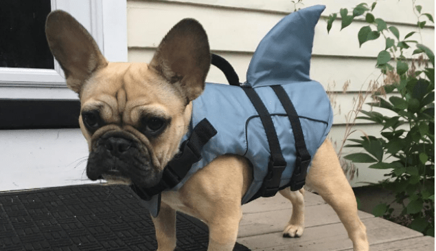 All ready for Shark Week.