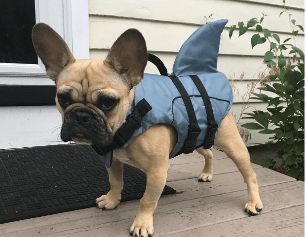 Social Download: Internet Reacts to Shark Week