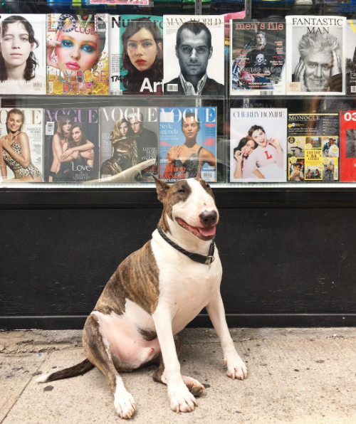 Marc Jacobs' Dog Will Be the Subject of a Coffee-Table Book