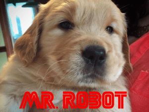 This dog is pumped for Mr. Robot..