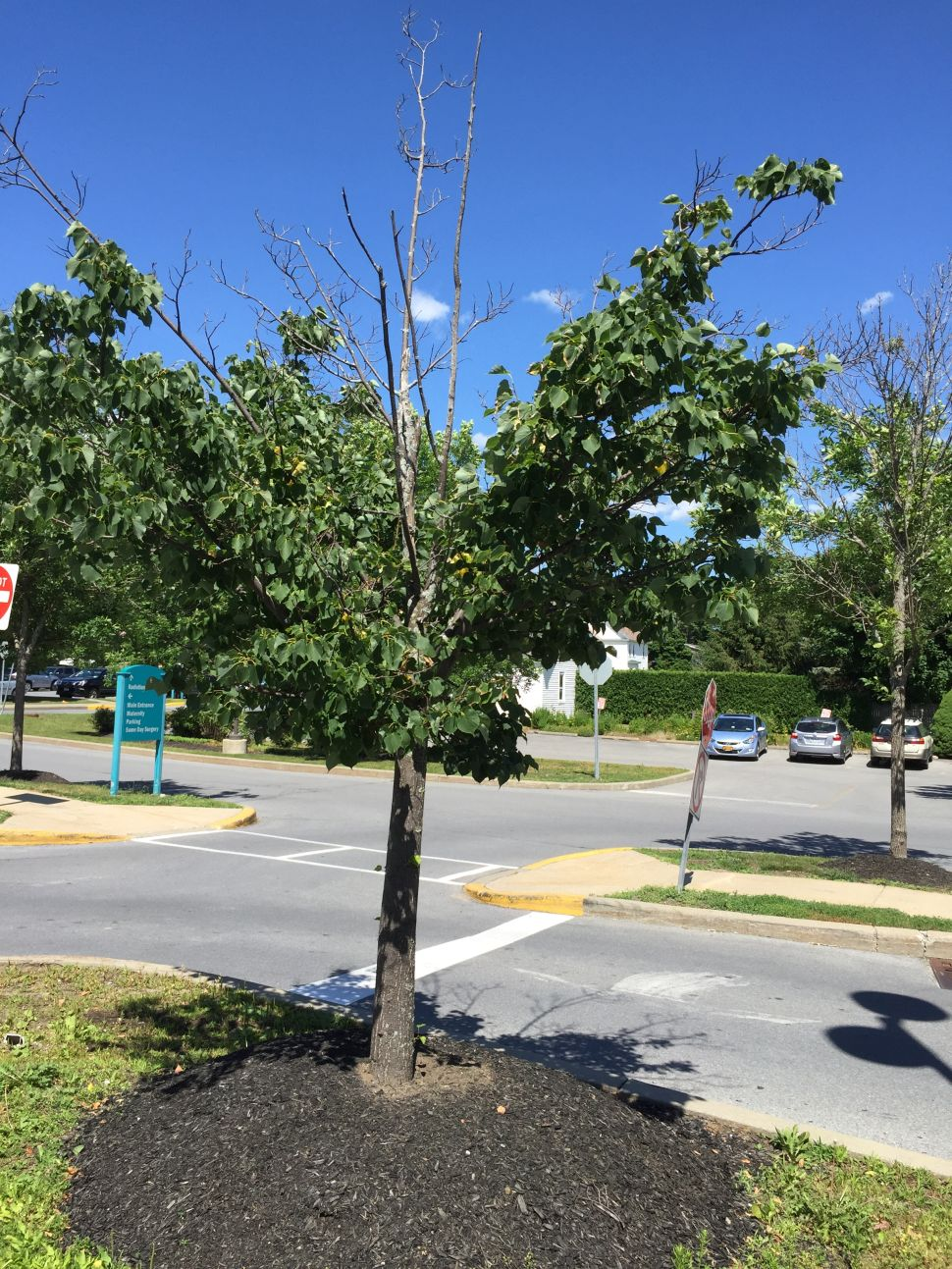 The Mass Murder of America's Trees Must Stop
