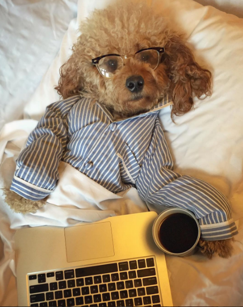 People Instagram Their Dogs More Than Their Significant Others
