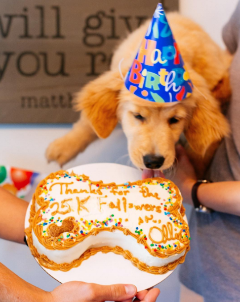 People Are Spending More Money Than Ever Spoiling Their Pets