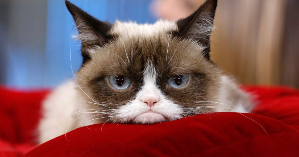 Parody Is Dead: The Real Grumpy Cat Will Appear in 'Cats' on Broadway