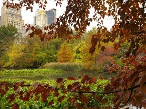 The Central Park Conservancy is hosting an Autumn in New York Gala on Thursday where guests can party among the fall foliage.