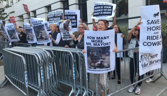 NYCLASS volunteers and animal rights activists protest across the street from Gracie Mansion.