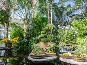 "New York Botanical Garden's ""Kiku: The Art of the Japanese Garden."""