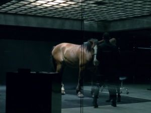 A horse on Westworld.