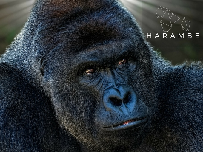 Someone Is Memorializing Harambe as a Zodiac Sign…on a Gold-Plated Diamond Watch