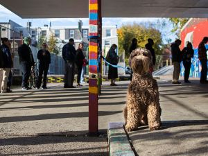 PHILADELPHIA, PA - NOVEMBER 8: A dog waits outside of a polling place for its owner to vote on November 8, 2016 in Philadelphia, Pennsylvania. Americans today will choose between Republican presidential candidate Donald Trump and Democratic presidential candidate Hillary Clinton as they go to the polls to vote for the next president of the United States. (Photo by Jessica Kourkounis/Getty Images)