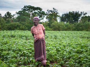 GiveDirectly recipient Rispa, in 2014. She used her cash transfers to improve her farm and add to her livestock.