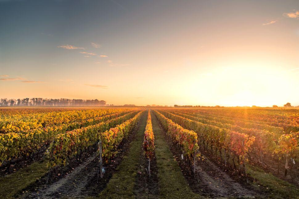 3 Vineyards to Visit in Artisanal Sardinia