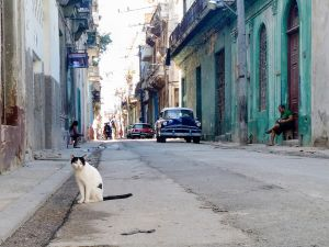 A cat in Havana.