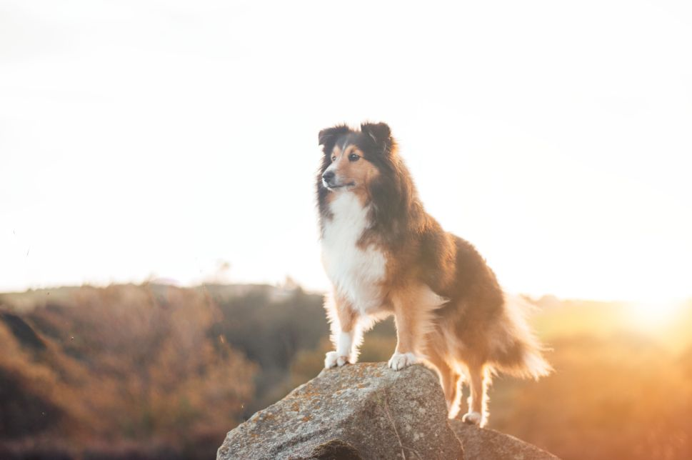 How Man's Best Friend Is Helping Cancer Treatment