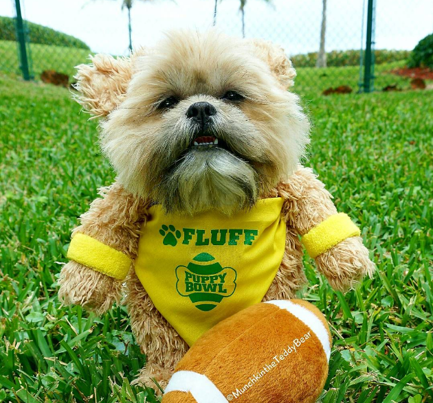 Social Download: Internet Reacts to Kristen Stewart's 'SNL' and The Puppy Bowl