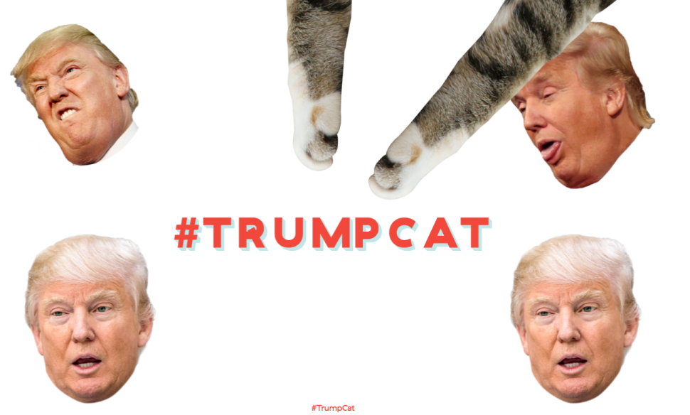 Exclusive: Trump Sics Lawyers on Teen for Making Silly Site Where Kittens Punch Him