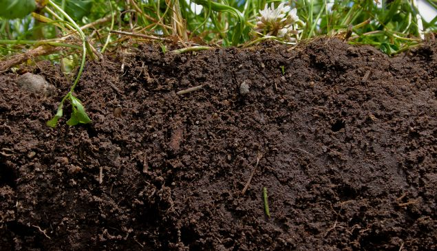 Planting a diverse blend of crops and cover crops, and not tilling, helps promote soil health.
