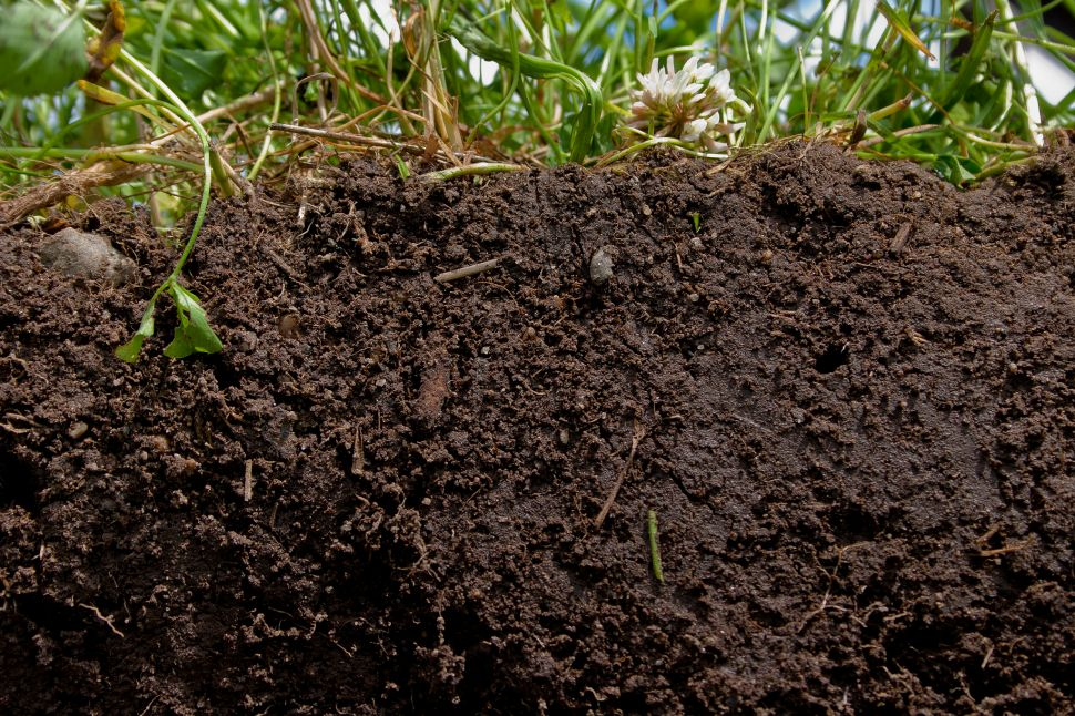 Healthy Soil Is the Real Key to Feeding the World