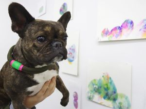 Miss Pickle is Instagram famous art world canine known for posing with art.