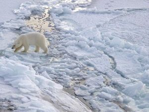 Doesn't Bret Stephens care about the polar bears?