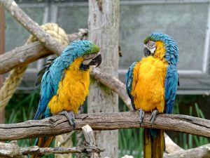 Parrots have a conversation.