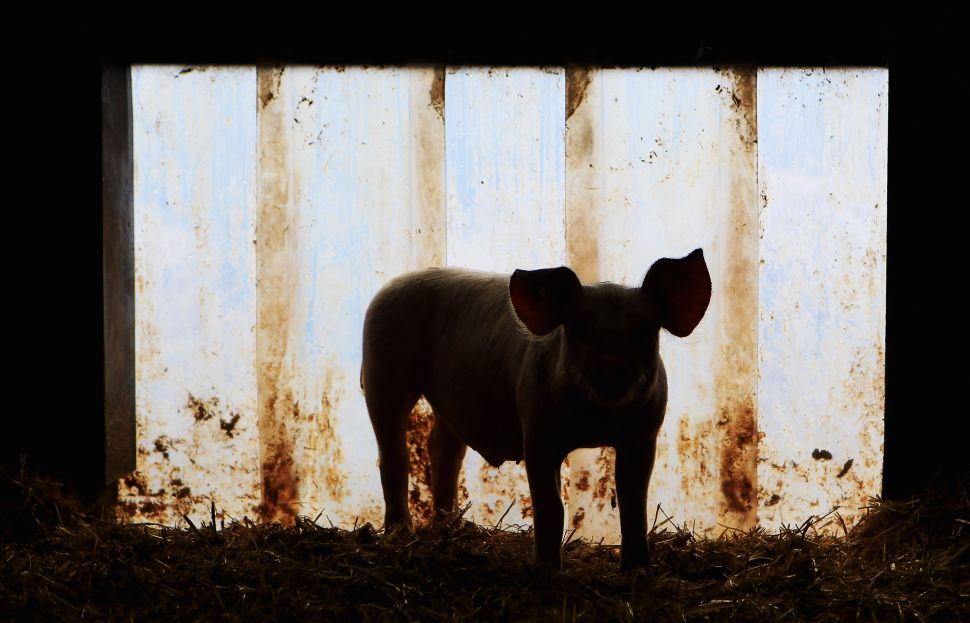 'Animal Farm' Perfectly Describes Life in the Era of Donald Trump