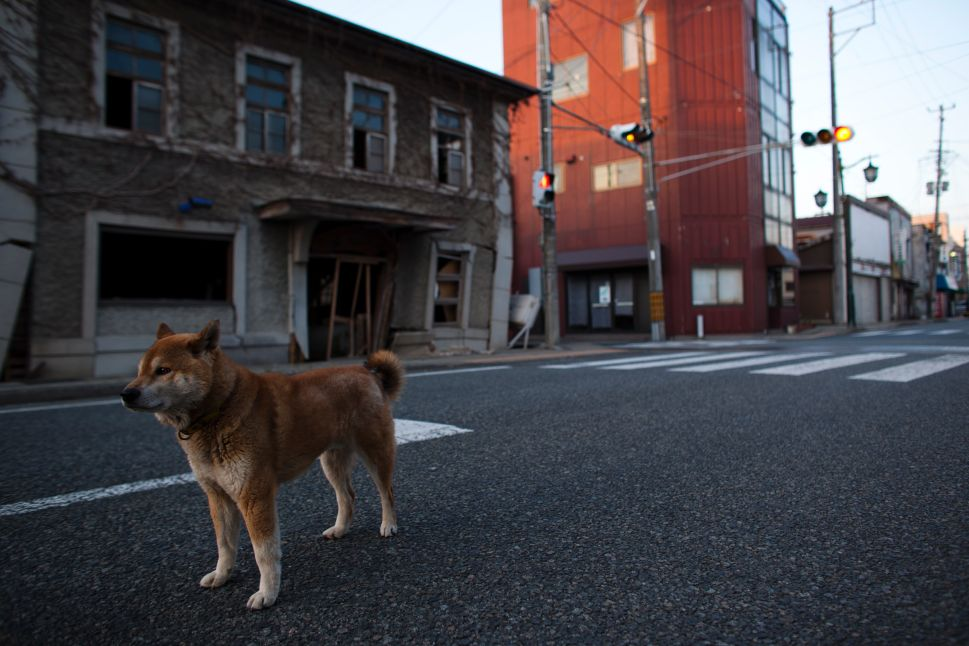 360 Film Gives Viewers First Look at Fukushima Exclusion Zone Art Show