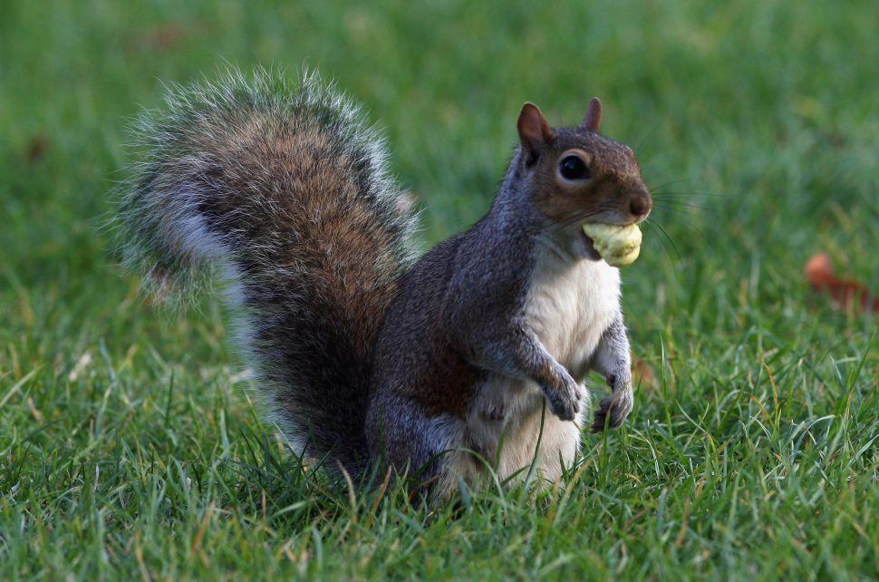 Nutty Professor Argues Squirrels Endure Media Racialism