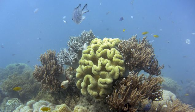 Fish swimming through coral on Australia's Great Barrier Reef.