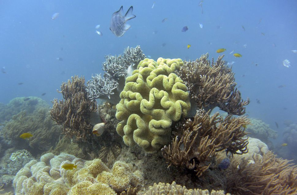 Underwater Unicorn: The Great Barrier Reef Was Just Given a $56 Billion Valuation