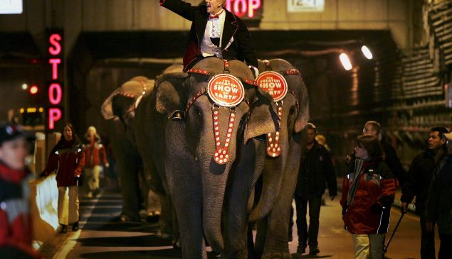 Ringling Bros and Barnum and Bailey Circus elephants emerge from the Queens Midtown Tunnel.