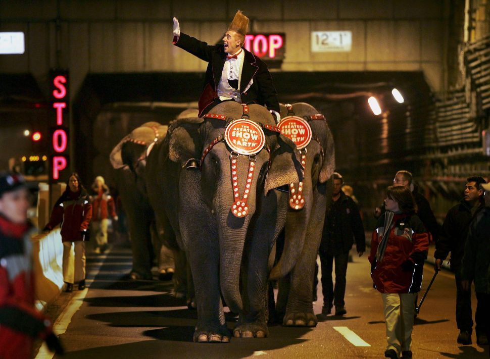 New York City Council Votes to Ban Use of Wild Animals in Circus Performances