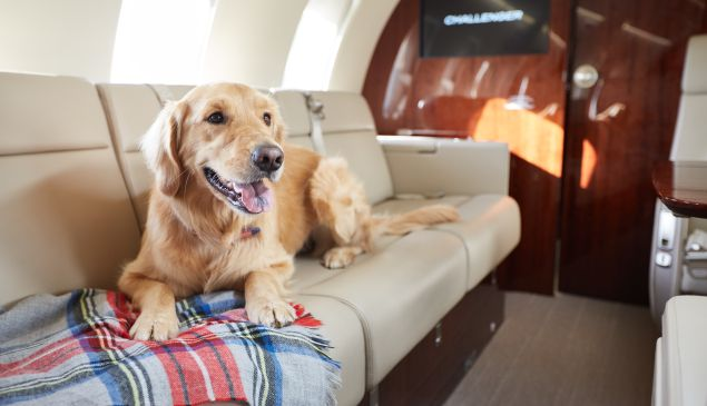Dogs on a plane is much better than snakes on a plane.