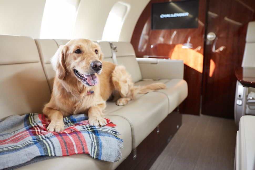 Inside the Pampered World of Family Pets on Private Jets
