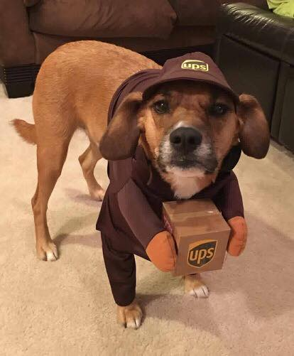 The 'UPS Dogs' Facebook Page Is the One Good Thing Left on the Internet