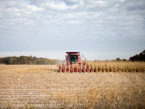 Corn is harvested in Iowa.
