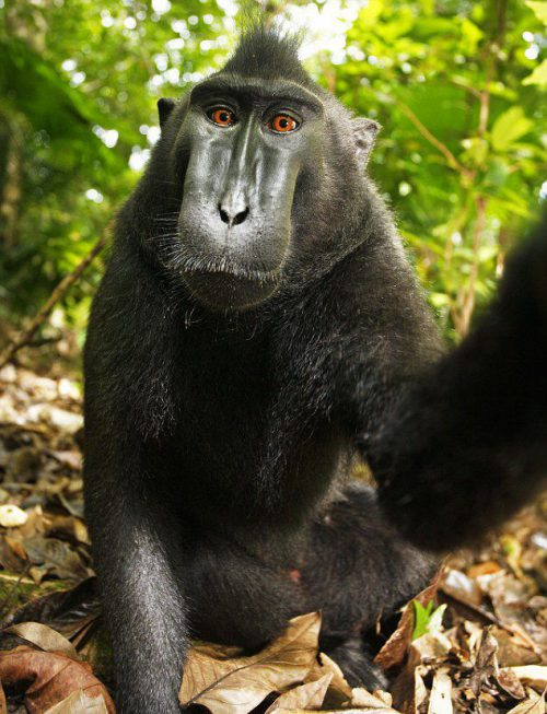 People Are Literally Suing Each Other Over the Rights to a Monkey Selfie