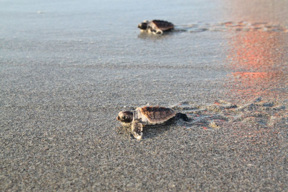 It's Not Easy Being a Sea Turtle, but Marine Center in Florida Tries to Help
