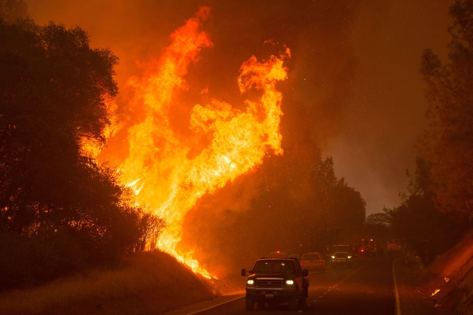 Trump Wants to Watch the World Burn, Proposes Drastic Cuts to Wildfire Resources