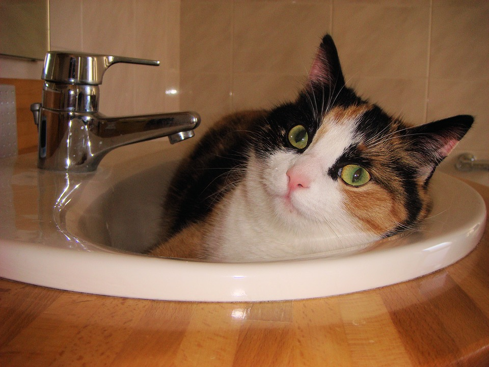 Harvard Awarded Ig Nobel Prizes to 10 Very Weird Scientific Studies—Like Liquid Cats