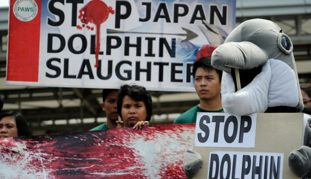 Activists from Earth Island Institute (EII) and the Philippine Animal Welfare Society (PWAS) hold a demonstration against dolphin hunting in front of the Japanese Embassy in Manila on September 1, 2016.