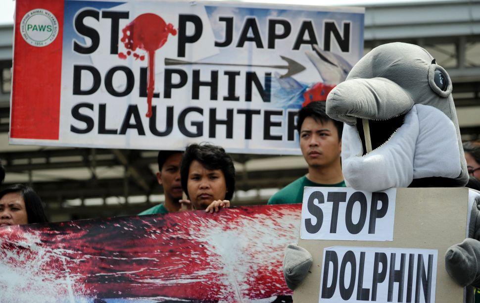 Japan's Horrific Dolphin Hunt Season Begins