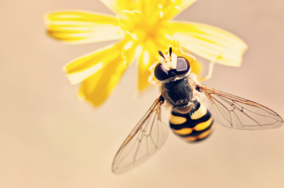 The Only Way to Be Positive in a Negative World? Don't Kick Over the Beehive