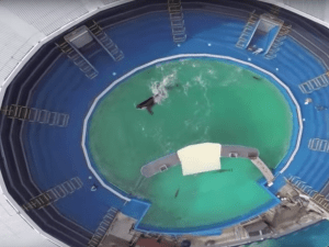 Lolita in her tank, as seen from aerial footage.