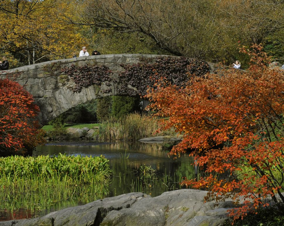 For a Healthy New York, Preserving Green Spaces Is Essential