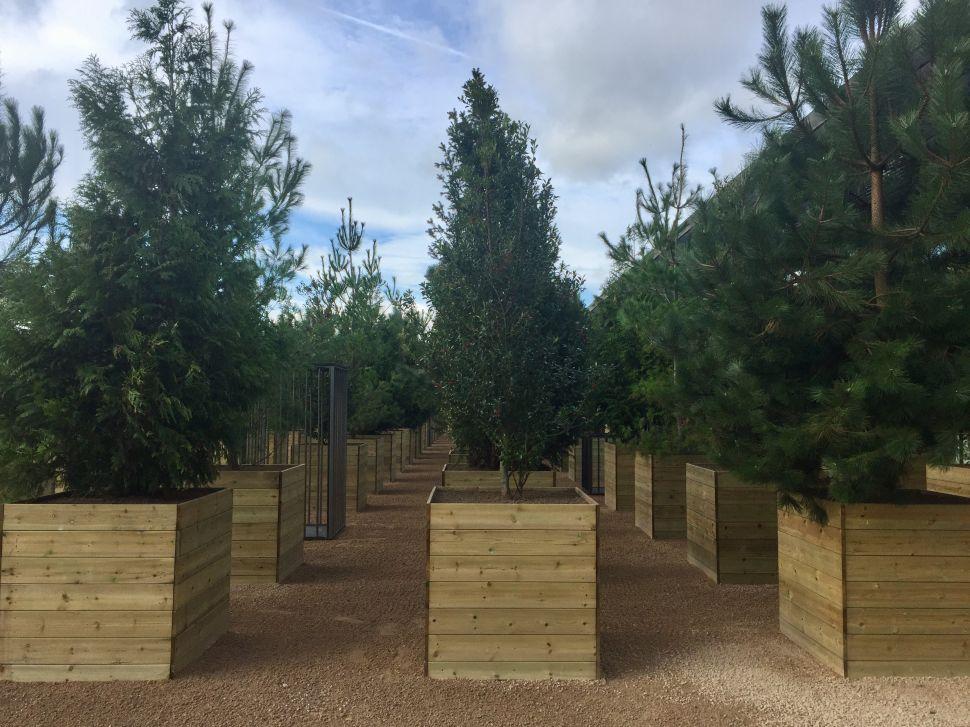 Alfredo Jaar Creates a Garden of Good and Evil in Northern England