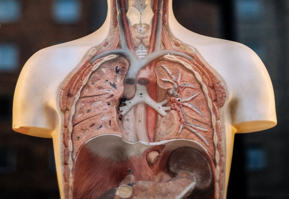 8 Lifestyle Changes to Ease the Effects of Lung Disease