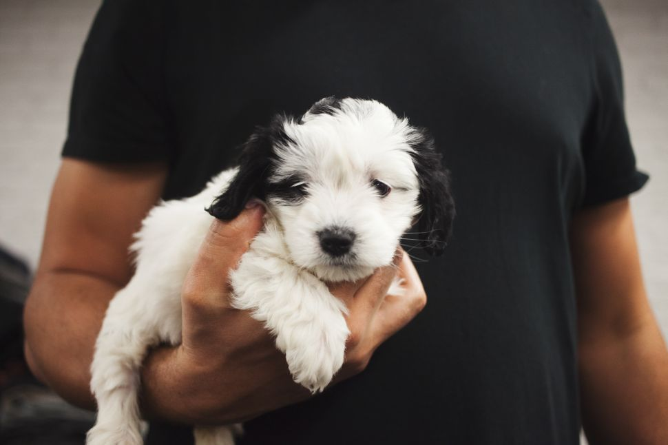 Single? Science Says 'Get a Puppy'