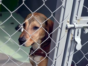 The NJSPCA could soon be disbanded.